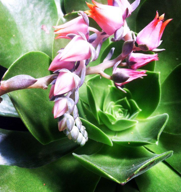 succulent up close at hmr designs