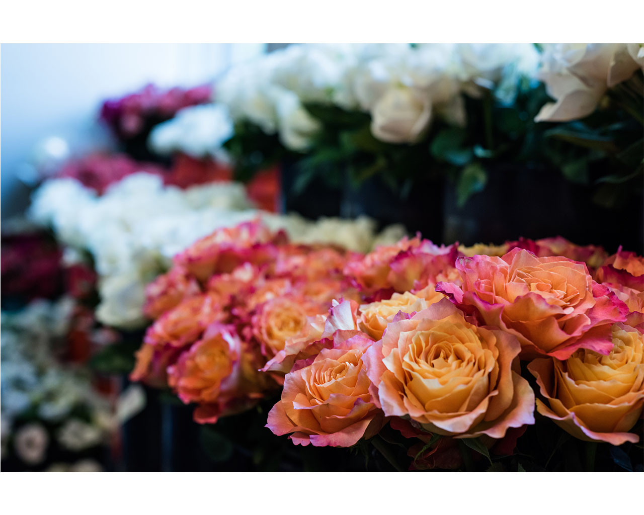 Gorgeous garden roses in the HMR Designs Floral Studio