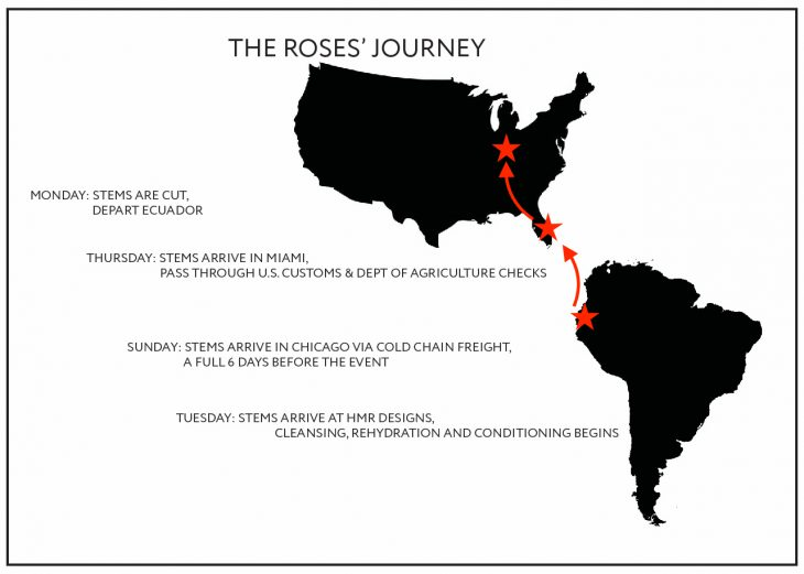 the rose journey