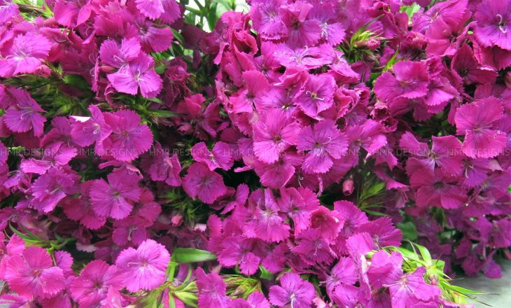 bold-purple-mother's-day-flowers-at-hmr-designs