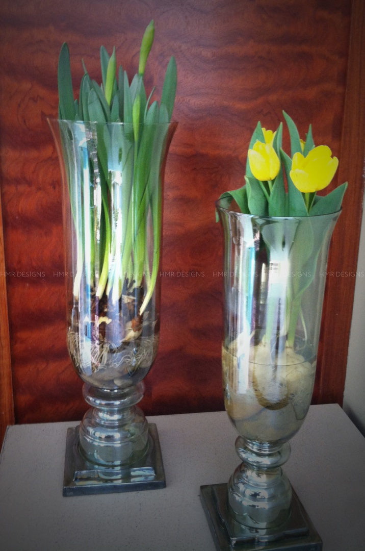 Try bulbs in water for your mother's day flowers
