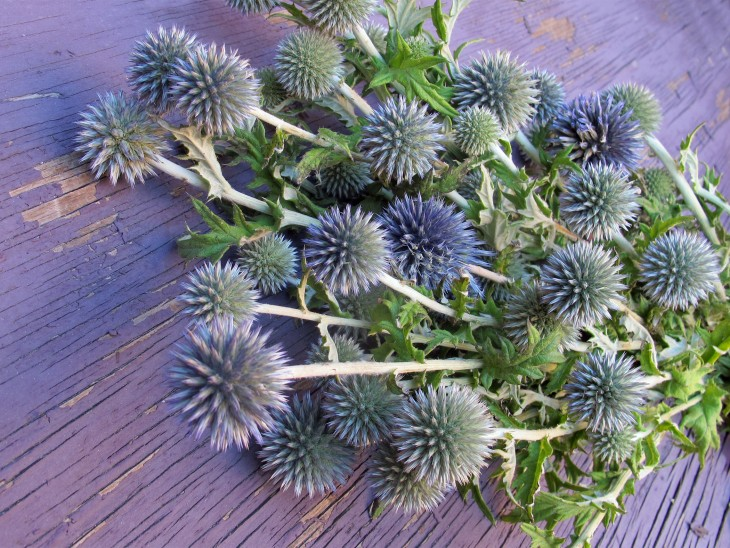 echinops-are-a-textured-fall-flower