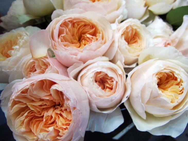 garden-roses-mother's-day-flowers