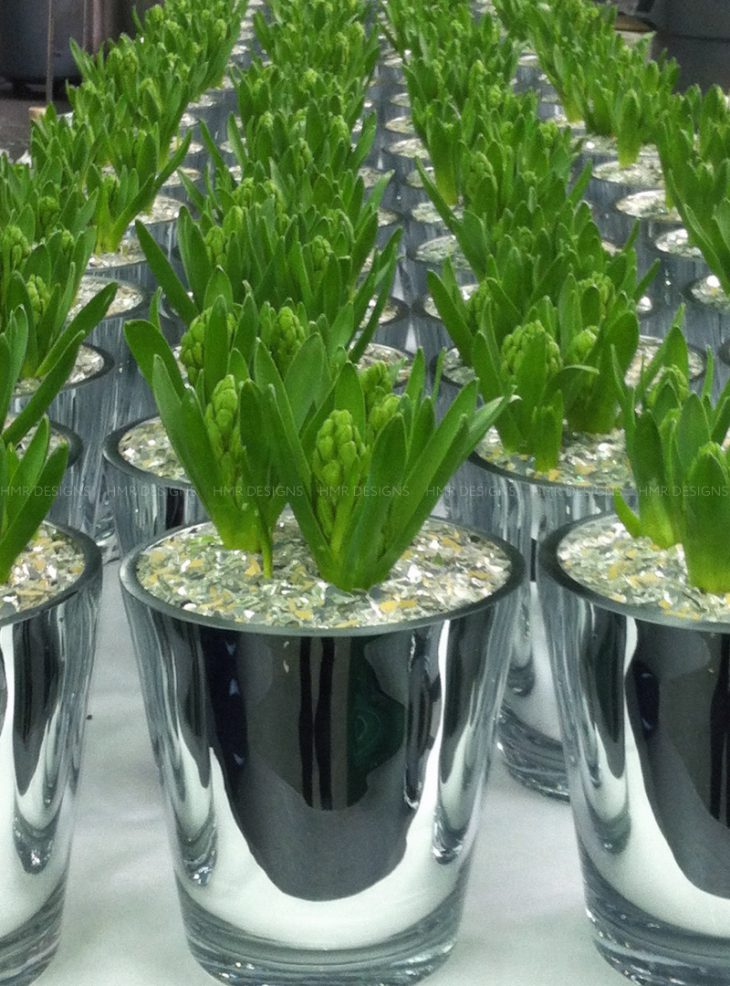 hyacinth bulbs for mother's day flowers