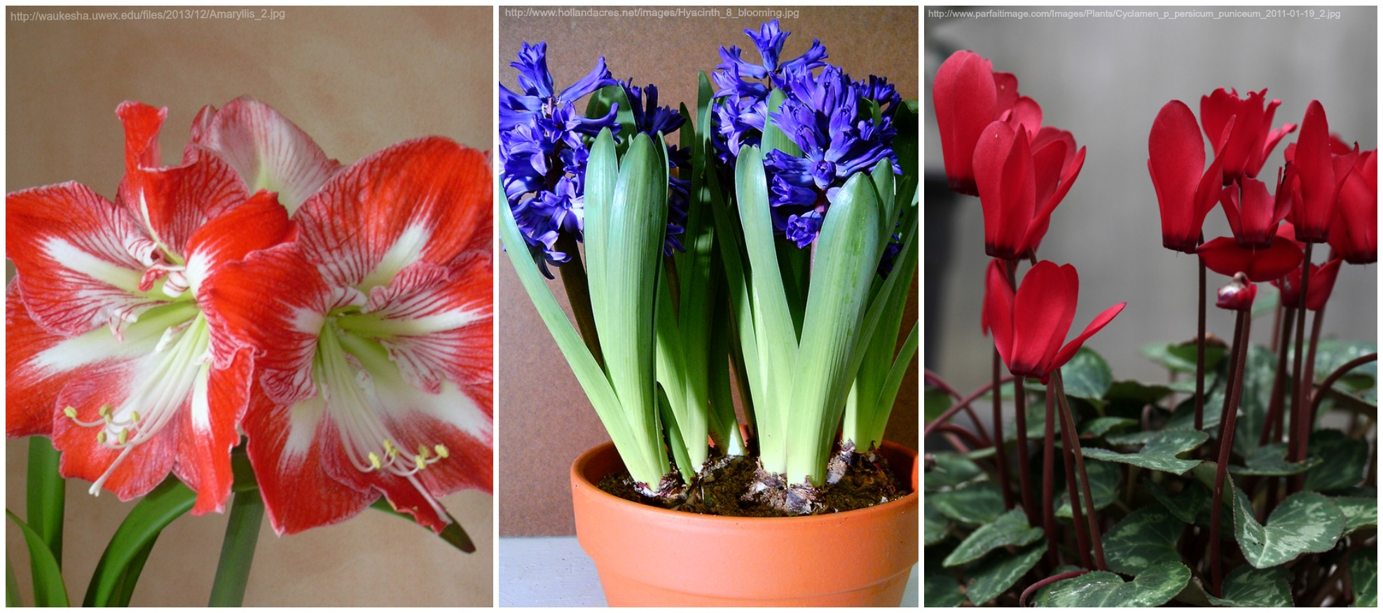 Winter plants to keep you smiling recommended by HMR Designs