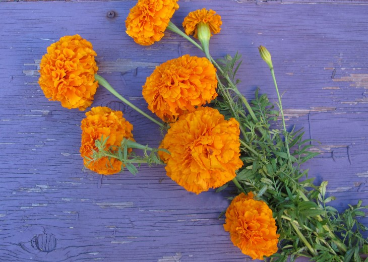 marigold-flowers-for-fall-centerpieces