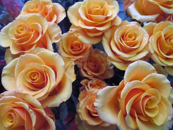 orange-roses-from-hmr-designs