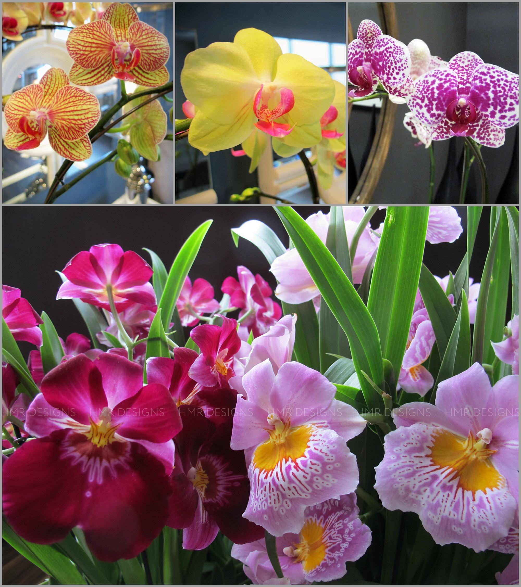 orchids at HMR Designs