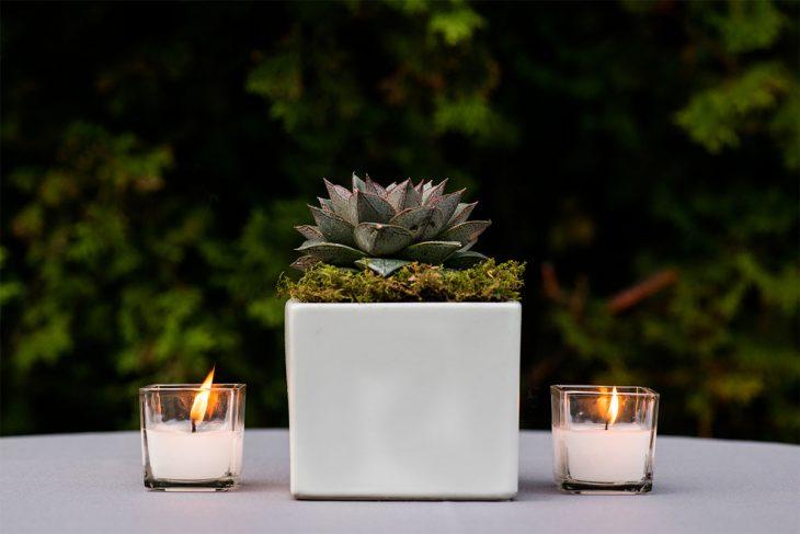 outdoor-celebration-decor-featuring-succulents-by-hmr-designs