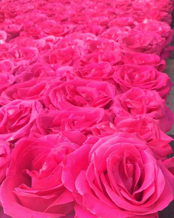 pink-floyd-roses-at-hmr-designs