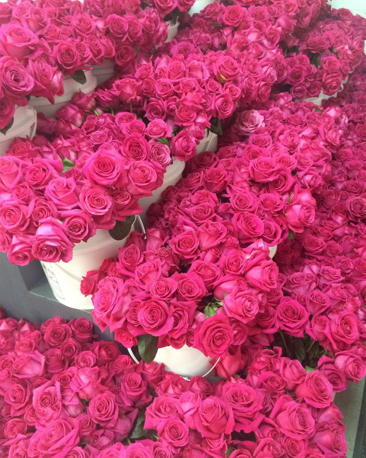 pink-flyd-roses-awaiting-production-at-hmr-designs-chicago