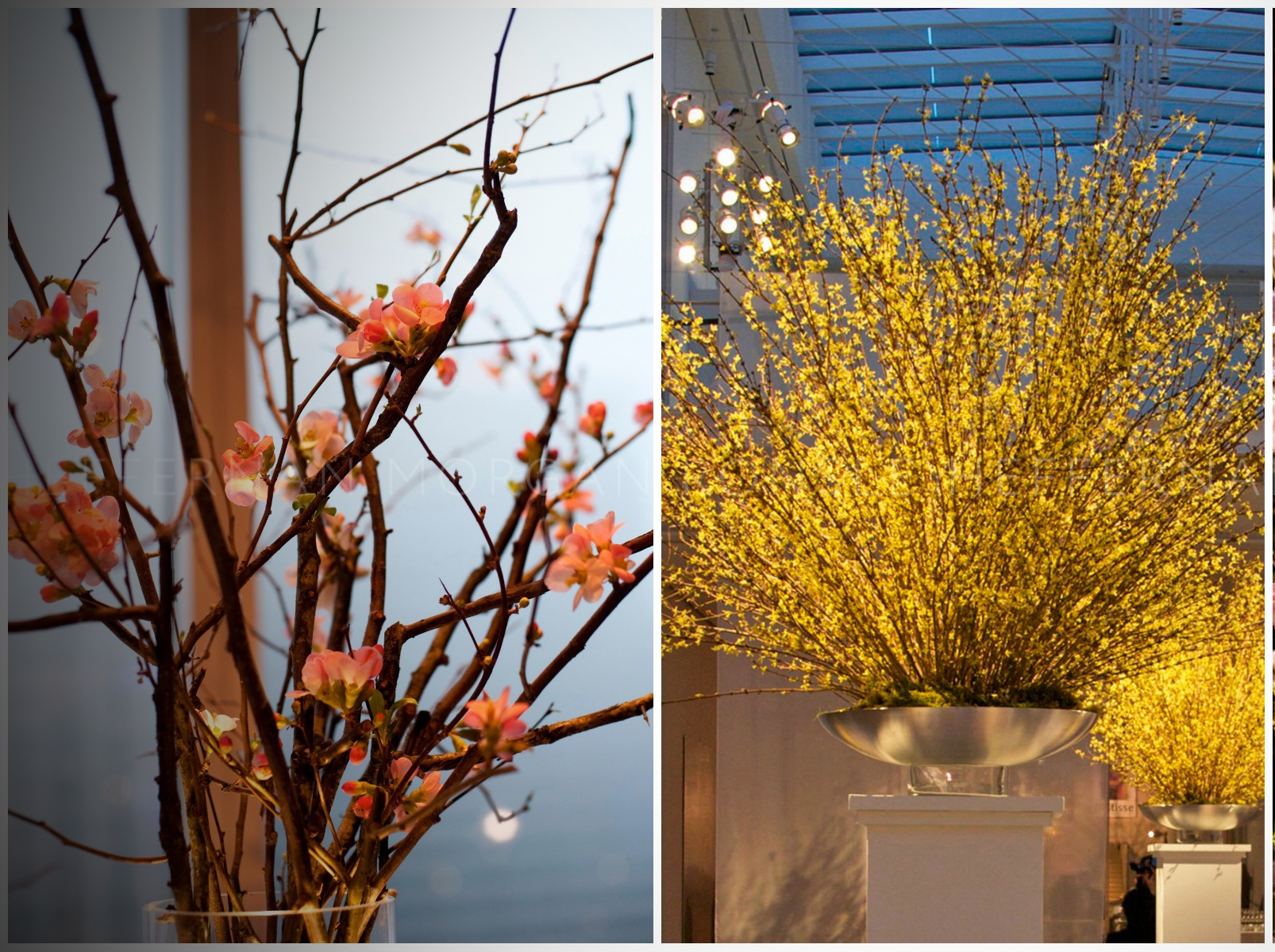 HMR Designs says to buy blooming branches like quince or forsythia to brighten the season.