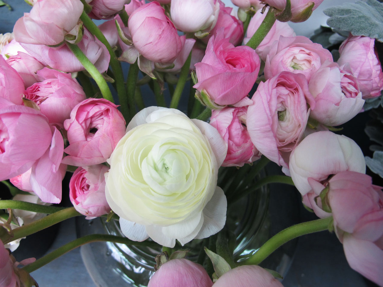 Ranunculus flowers in the HMR Designs studio