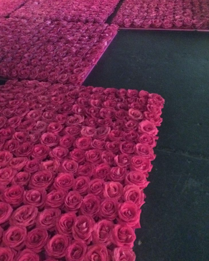 rose-production-underway