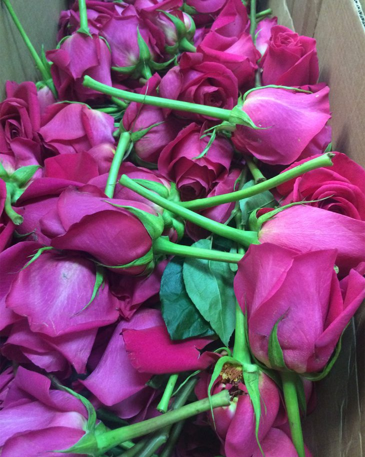 roses-pre-production-at-hmr-designs