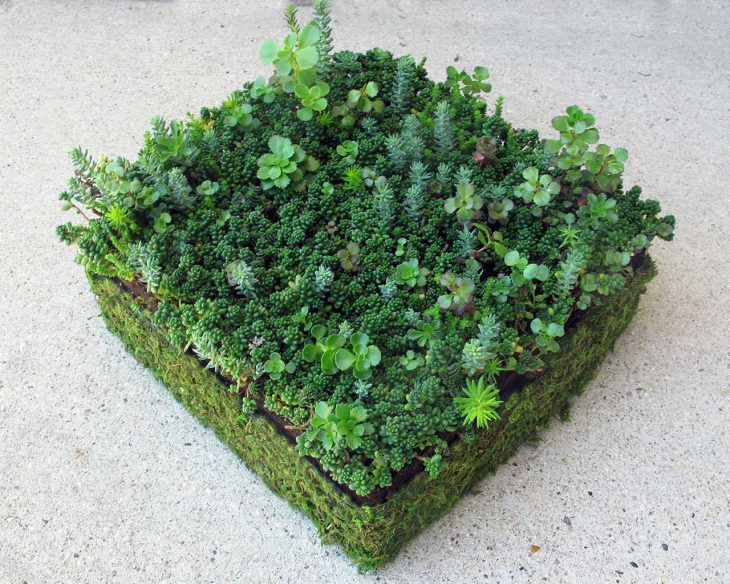 sedum-tile-of-succulents-for-father's-day-gifts