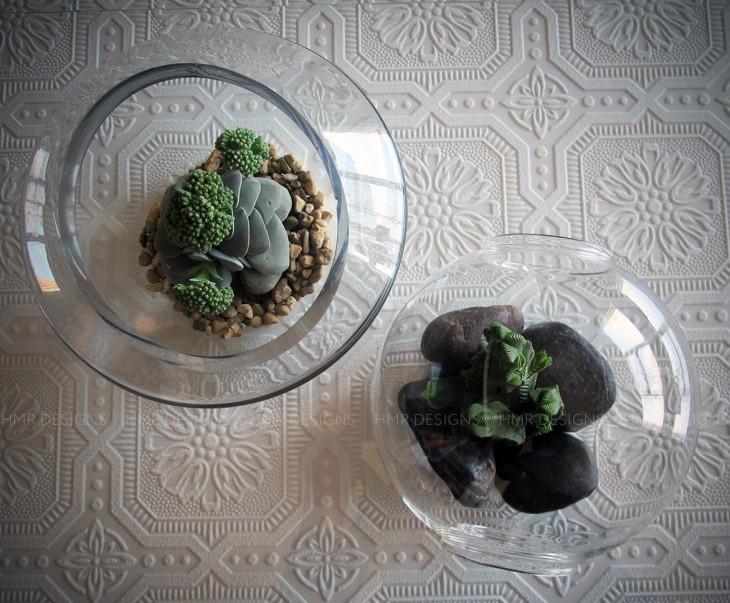 Succulents at HMR Designs