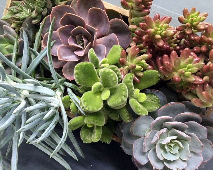 succulent-garden-by-hmr-designs
