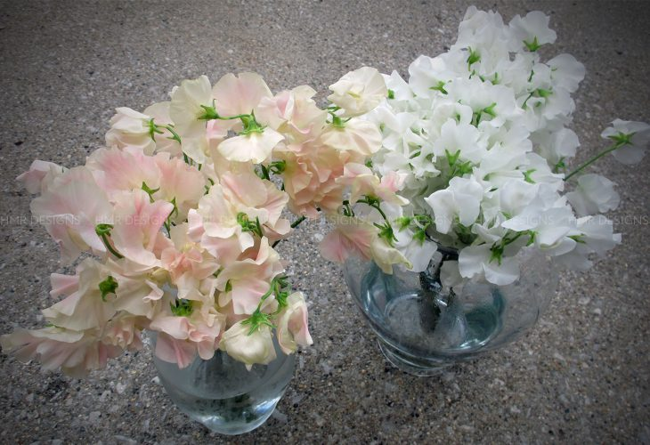 sweet-peas-for-mother's-day-flowers