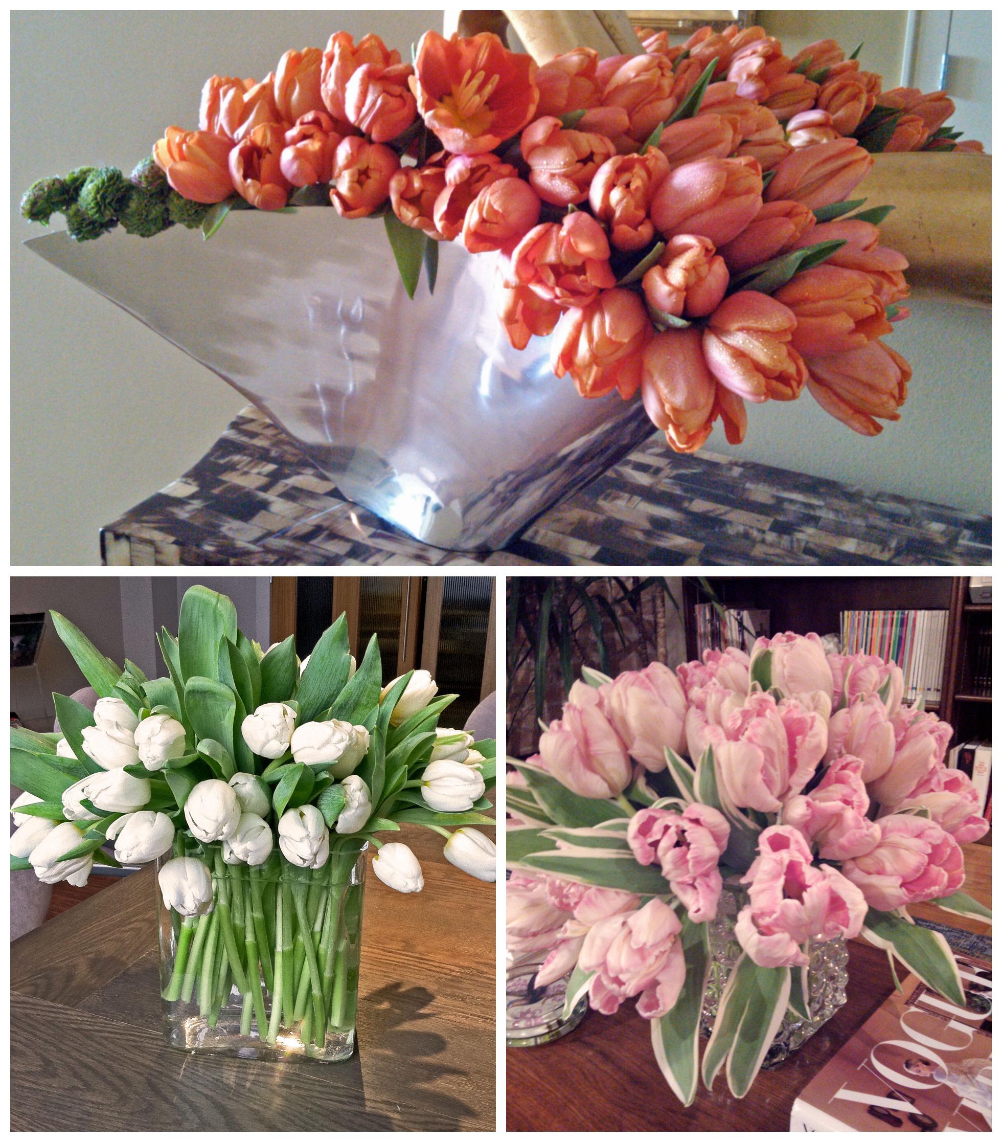 tulipcolvert