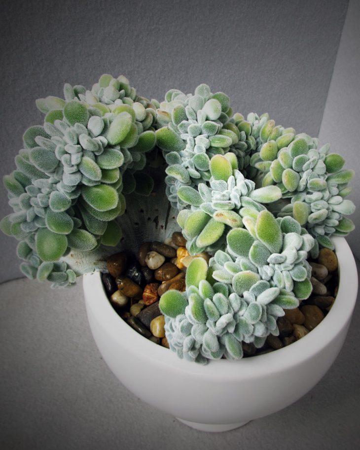 unique-succulent-plant-by-hmr-designs