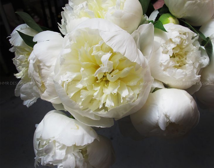 white-peonies-for-mother's-day-flowers